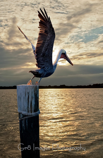 D_WHopkins_Pelican_Pointework-