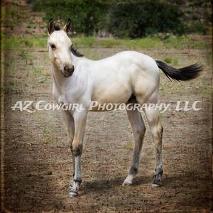 2018-K & J Quarter Horses-025