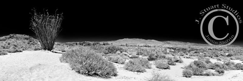 Ocotillo Panoramic Infrared