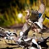 09-02-15-Duckhunt-0008-3