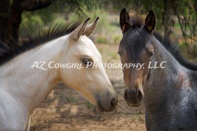 2018-K & J Quarter Horses-028