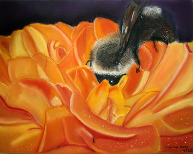 """Bumblebee on Marigold"" Pastel 2 out of 5 for Body of Work, Drawing III, by Nancy Ann 4/2013"