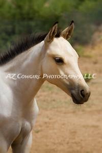2018-K & J Quarter Horses-031