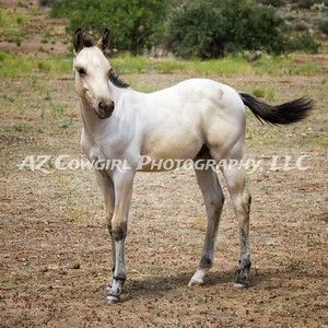2018-K & J Quarter Horses-026