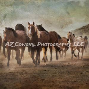Horses-05