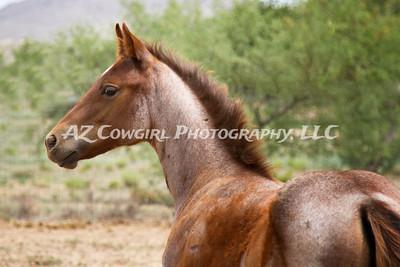 2018-K & J Quarter Horses-036