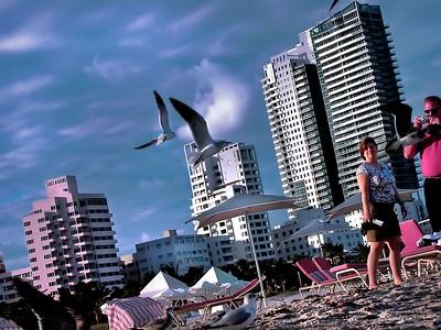 Watch the Birdies - South Beach, Florida