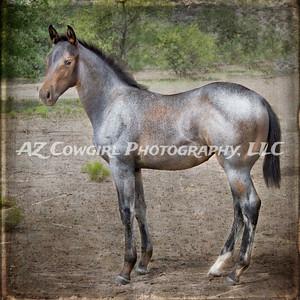 2018-K & J Quarter Horses-027