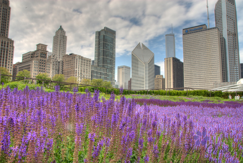 The Lurie Gardens, Chicago.