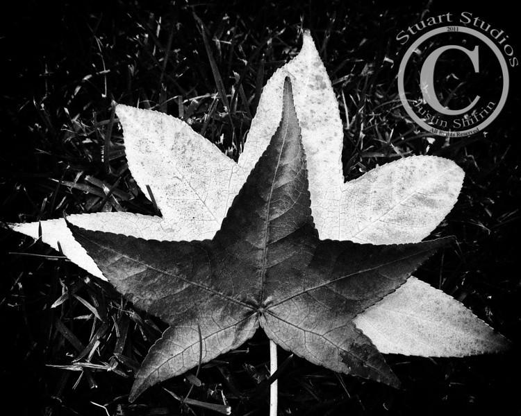 Leaf Stack