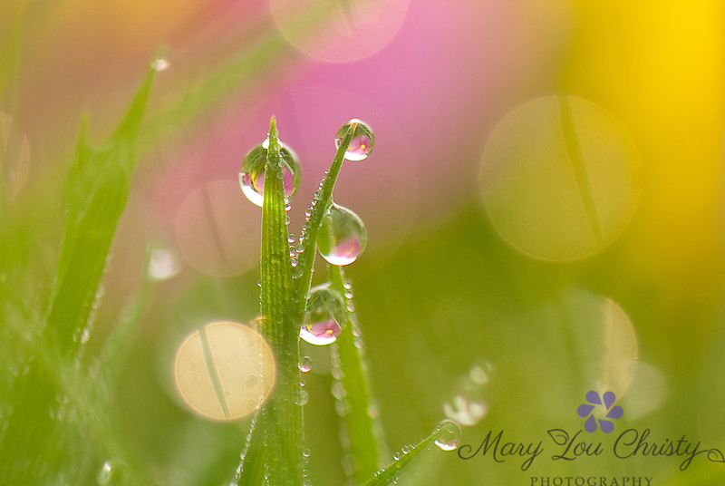 Magical Summer Dew Drops