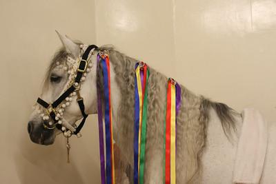 7042-winged-horse-correct-6821