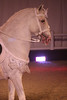 7042-winged-horse-correct-7058