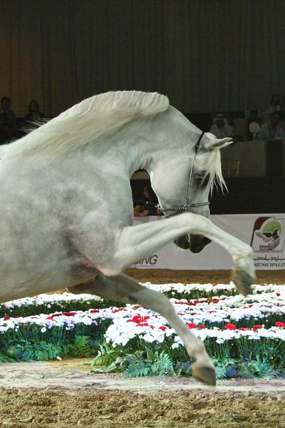 6380 stallion fight-6380