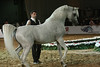 6369-specstallion-win-6369