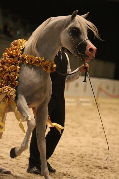 stallion-scream-8376