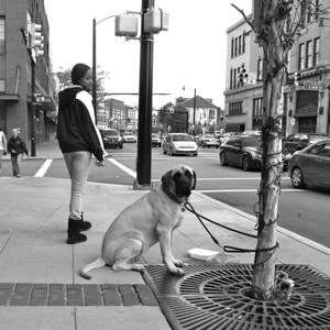 Carson Street Canine - Urban Landscape