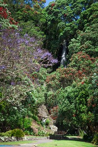 Wairere Waterfall in Flower
