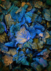 Fall Leaves, Montgomery, Ala., Nov. 16, 2011. By David Bundy