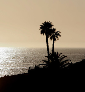 Silhouette of Palms, Coastal Laguna Beach, CA
