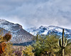 Sabino Canyon in Winter, Tucson, Arizona