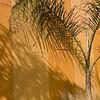 Palm Shadow