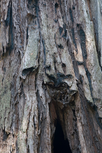 Redwood Drapery
