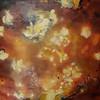 Ramirez-Koi-36x36 canvas