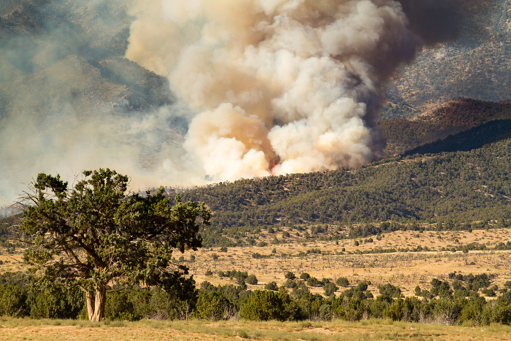 Patch Springs Fire