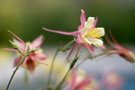 Flora : Photos of flowers, trees, flowers, leaves, flowers, moss, fungi, and more flowers...