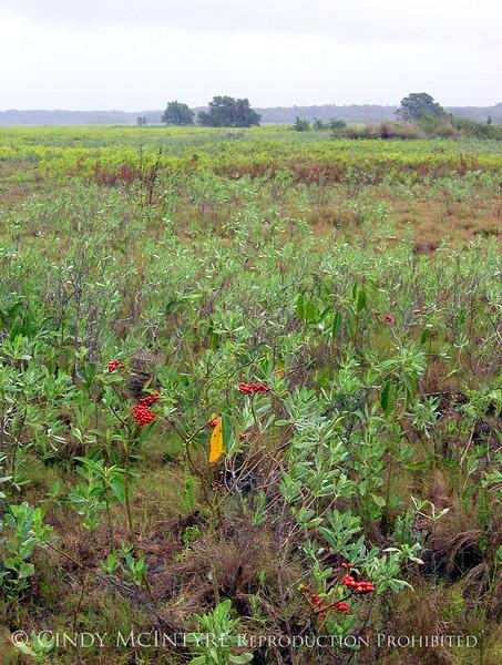 Everglades Coastal Prairie