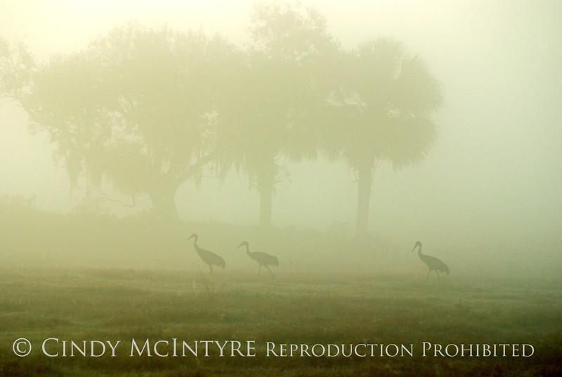Sandhills in Fog copy