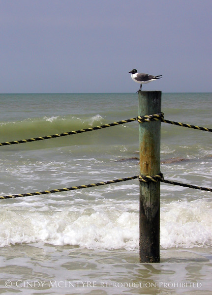 Gull and Piling V