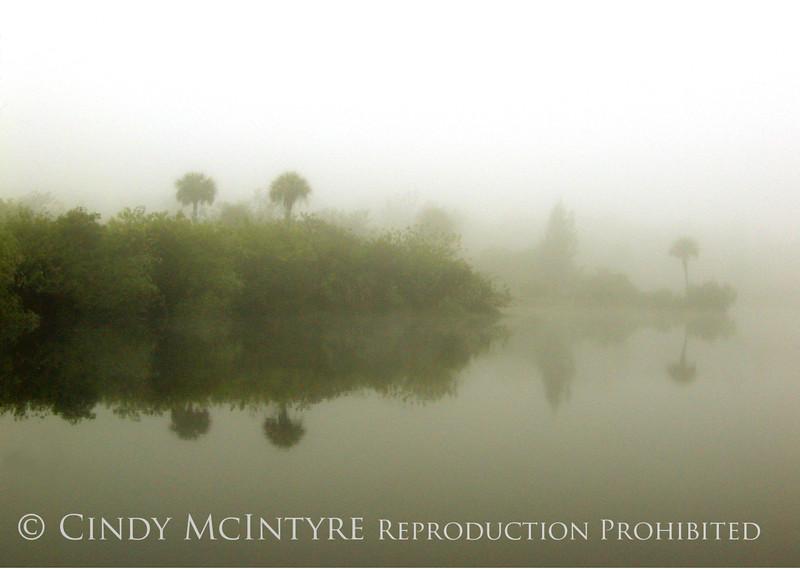 Everglades Fog