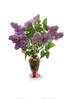 Lilacs in Vase 13x19 copy