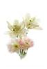 4 Peony Tulips on White 10x14 copy