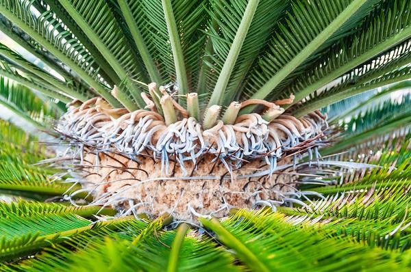 Palm macro