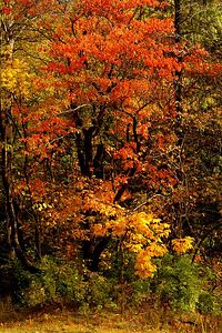 Fall Tangle