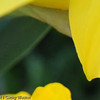 Yellow Flower-9-1245808233-O