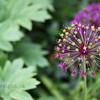 flowerIMG_3088