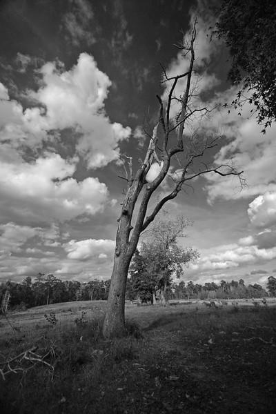 Dead tree Cut N Shoot, TX<br /> Canon 40D, 10-22