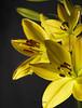 3 lillies