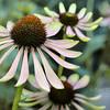 flowerIMG_5768