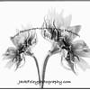 bw2flowers