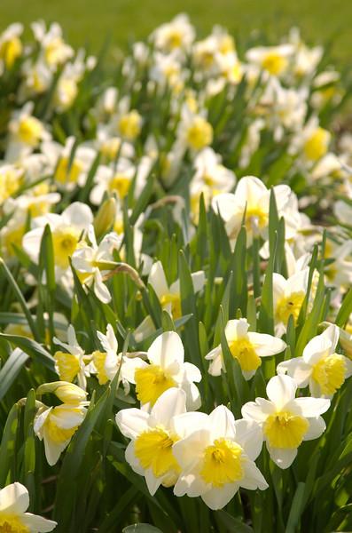 Gillson Park, April