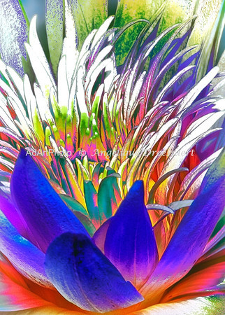 Duke Waterlilies 61 - Version 3