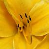 yellow 5741