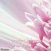 Pink Flower 03302011-2-1234324245-O