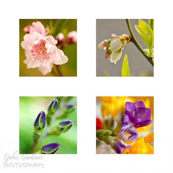 Flowers 2011 SP