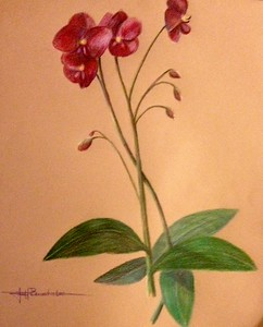 "Orchids 14""x17"" Oil Based colored Pencil on Kona paper"